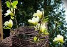 Na zakończenie II Międzynarodowego Sympozjum Form Przestrzennych w Wiklinie - Rudnik nad Sanem 2010 przed Centrum Wikliniarstwa zakwitła piękna magnolia.