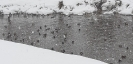 Zima w obiektywie Wiktorii Serafin - luty 2021